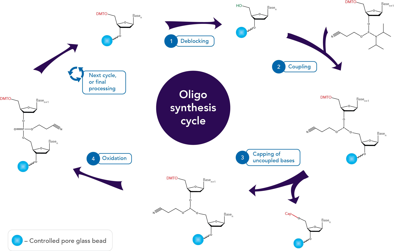 oligo synthesis why idt leads the oligo industry. Black Bedroom Furniture Sets. Home Design Ideas