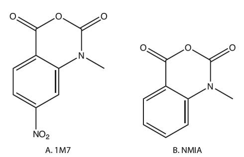 YR_SHAPE_Figure 1